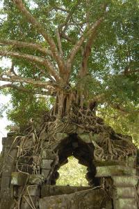 ベンメリア遺跡(カンボジア)