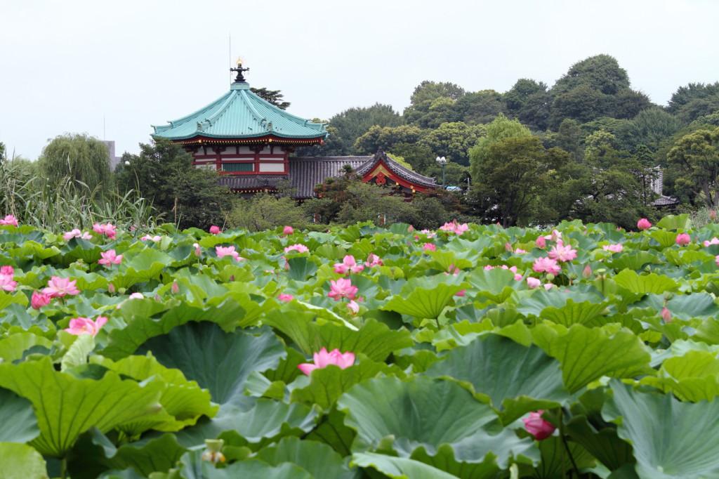 弁天堂と蓮華 (東京・上野不忍池)