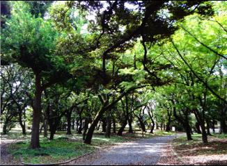 神社の緑道