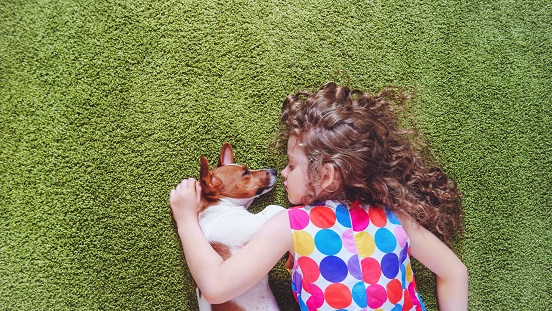 Cute child with puppy jack russell sleeping on the green carpet.