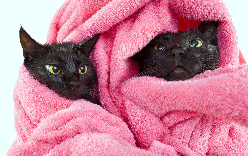 Two Cute black soggy cats after a bath