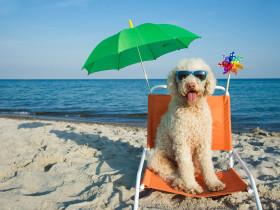 サングラスをかけている犬