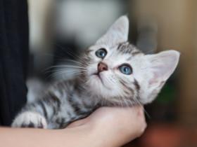 飼い主を見上げる猫