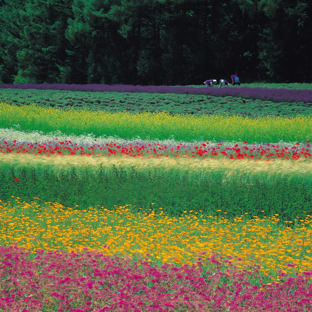 北海道の見所